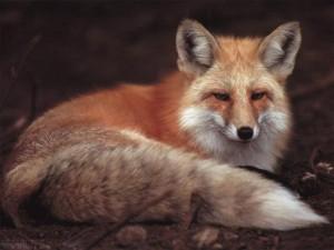 Стихи про лисицу для детей