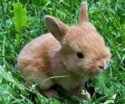 Стихи про зайца. Детские стихи о зайце