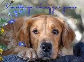 Стихи про собаку для детей