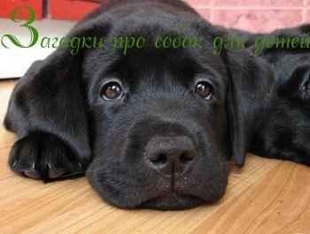 Загадки про собак для детей